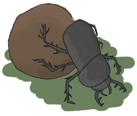 A dung beetle pushing its crap